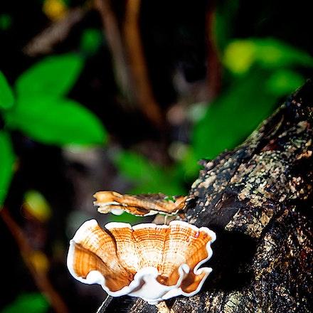 Fungi_in_the_Jungle