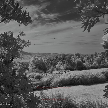 Birds on a Wire - Mt Stromlo Observatory. CV21/4 on Ricoh IR-A12