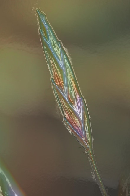 glass seed