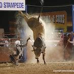 Australian Rodeos 2014