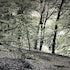 Woodland, Hardcastle Crags, Yorkshire. - Engulfed by a wonderful Yorkshire woodland. Magical.