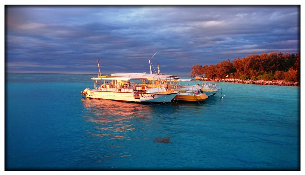 Dive Boats - Heron Harbour