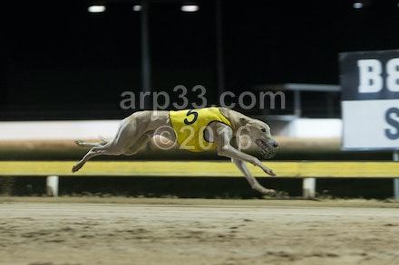 Greyhounds 071015-11