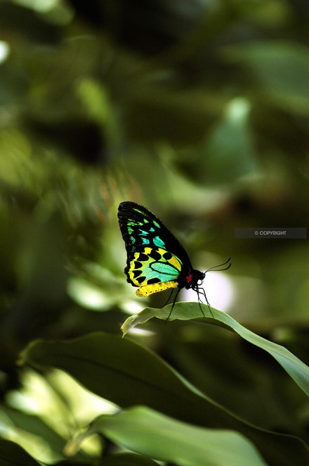 7 - Tropical-butterfly