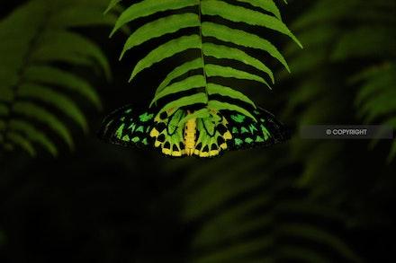 13 - Green Butterfly