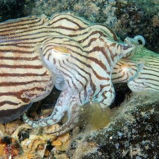 Ocean photography portfolio