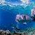 Bumphead parrotfish_7123