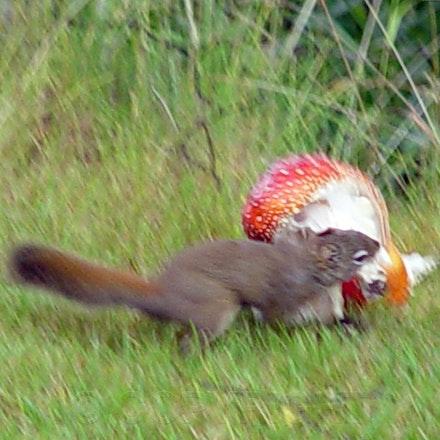 Squirrel Theft