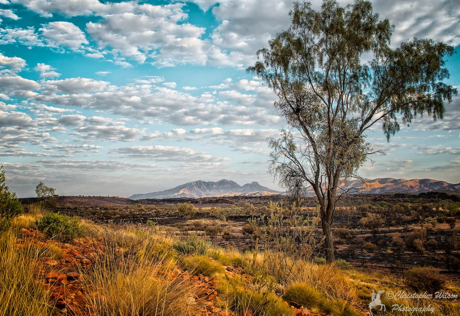Namatjira's Country - Mt Sonder, NT - The early morning sun lights up the outback. This is the country made famous by the aboriginal painter Albert (Elea)...
