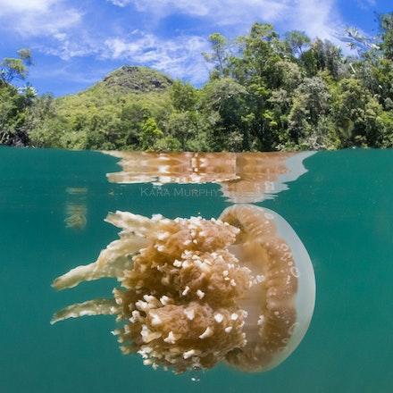 Raja Ampat, Indonesia - Raja Ampat's spectacular underwater world.