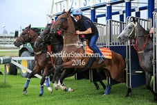 5 FEB RANDWICK JUMPOUTS AND TRACKWORK