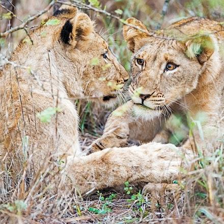 021 Thanda Safari Lodge 030515-8108-Edit