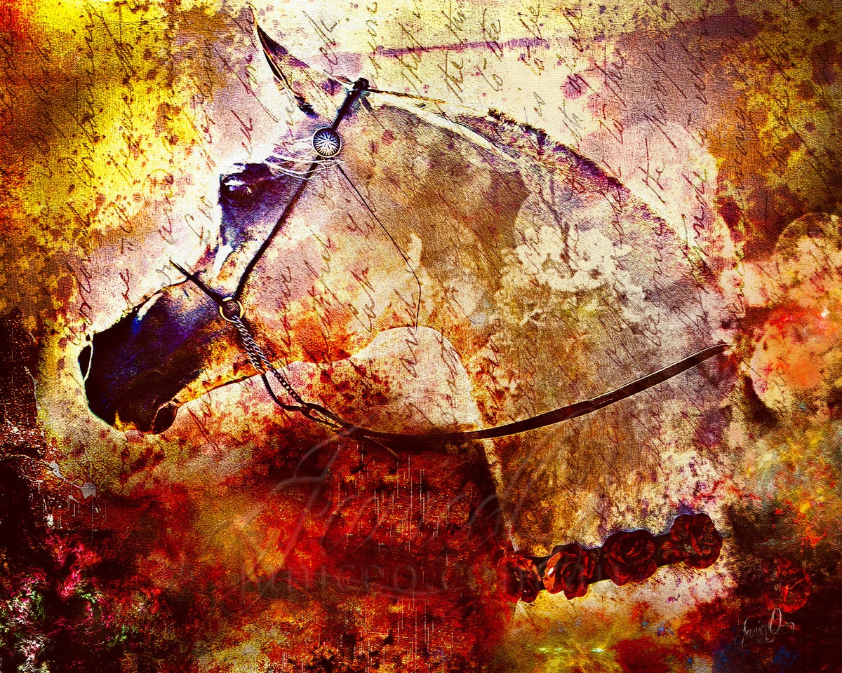 The Sands of Time - A grey purebred Arabian stallion staring down the ages of his heritage.