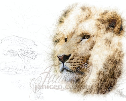 The King - The lion is a magnificent animal that appears as a symbol of power, courage and nobility on family crests, coats of arms and national flags...