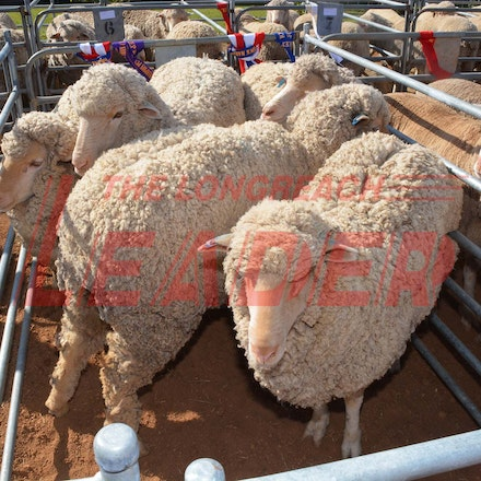 170526_DSC_0859 - Action at the 2017 Isisford Sheep and Wool Show