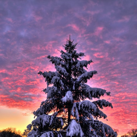A Tree is a Tree 2.20.2015.8 - A Tree is a Tree. An exquisite array of sunset colors is the backdrop for a snow covered pine tree in Pioneers Park. Lancaster...