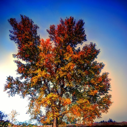 Proud 10.20.2015.6 - Proud. Cottontail Lake in Lancaster County, Nebraska is home to this vibrant tree showing off a multitude of fall foliage colors....