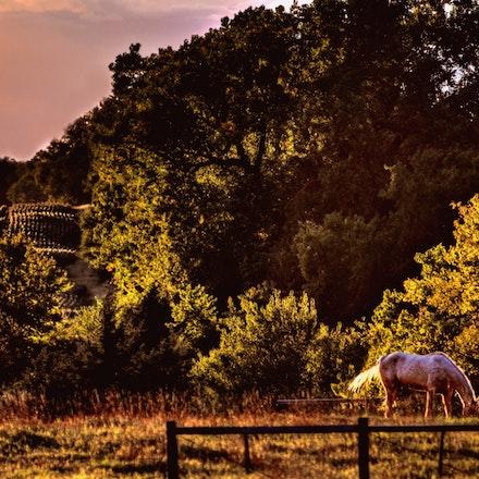 Grazin    10.5.2014.3 - Grazin. A horse enjoys her supper on a cool fall evening in Roca, Nebraska. Lancaster County, Nebraska. #nebraska #pasture #horse...
