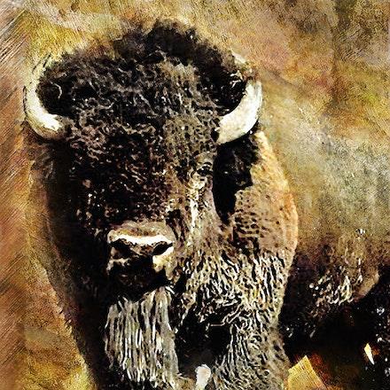 Buffalo Grunge Poster 30x40