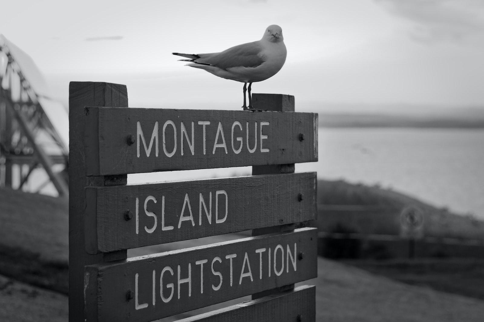 Montague Island Sign